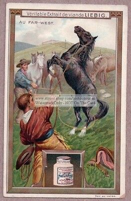 Western Cowboys Roping A Wild Horse 1907 Trade Ad Card