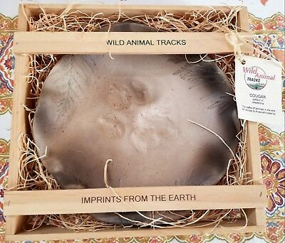 Wild Animal Tracks Canada COUGAR Earth Footprint Imprint Cast in Clay - GR8 Gift