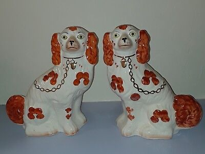 Spaniels reproduction