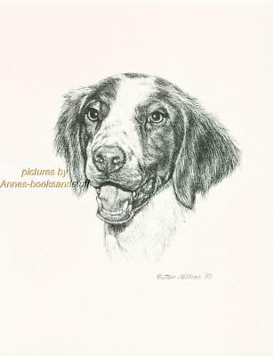 #245 BRITTANY  SPANIEL dog art print * Pen and ink drawing by Jan Jellins