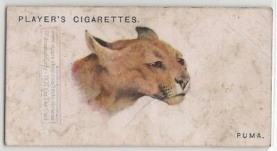 Puma Wild Big Cat Feline 85+ Y/O Ad Trade Card