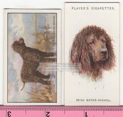 Irish Water Spaniel Dog 2 Different Vintage Ad Trade Cards #3 Canine Pet