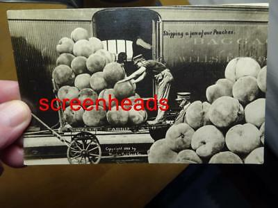 Estate Find-1909 RAILROAD WORKERS EXAGGERATED PEACHES RPPC PHOTO