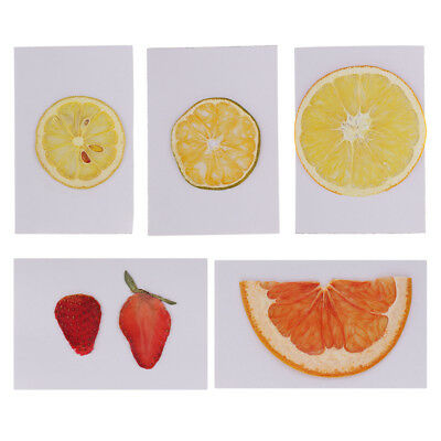Real Dried Pressed Fruits Slices Plant Herbarium for Resin Casting DIY Craft