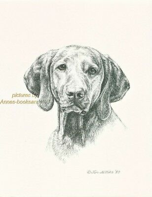 #262 VIZSLA portrait  dog art print * Pen and ink drawing * Jan Jellins