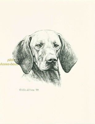 #193 VIZSLA  dog portrait art print * Pen and ink drawing * Jan Jellins