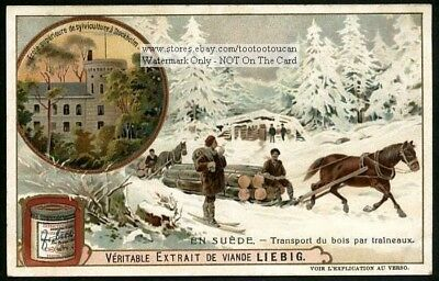 Horse Sleigh Pulling Logs Sweden Scandinavia 1905 Trade Ad  Card