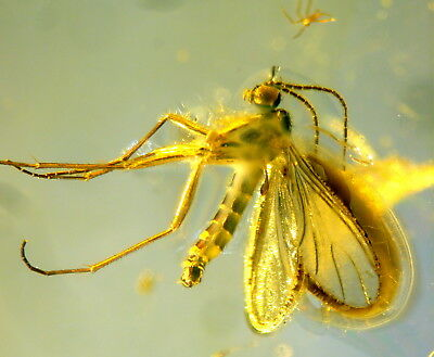2 Fossil Insects In Baltic Amber 45-55 Millions Years Old(9709 )