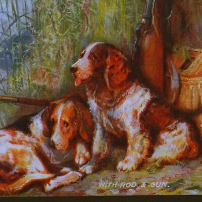 Sussux Spaniel & Beagle Hound Sporting Dogs With Fishing Creel,gun,old Postcard