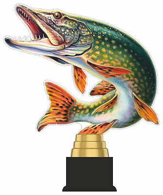 FISHING ANGLING FISH TROPHY CUT TO SHAPE ACRYLIC *FREE ENGRAVING* 300mm COLOUR