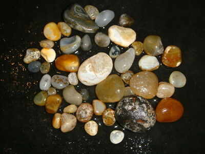 Oregon Beach Agates     1  Pound