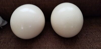Lot of 2 Beautiful Large Blown Ostrich Eggs Great for Crafting