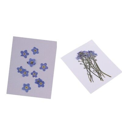 20x Forget me not Dried Flowers Plant Herbarium DIY Arts Crafts Scrapbooking
