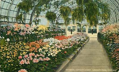 Postcard Lincoln Park Conservatory Interior View, Chicago, Illinois - used 1916