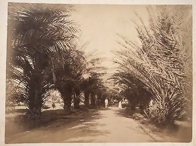 1885 Vintage Albumen Photograph By Chase Of Date Palm Avenue, Oahu Hawaii
