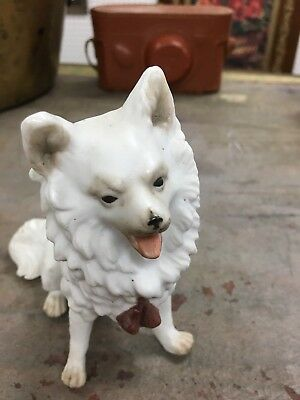Pre 1900 Early German Bisque Porcelain Cute Spitz Dog 🐕  Figurine