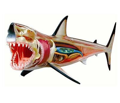 Shark 4D Vision Great White Shark Anatomy Sculpture Toy Puzzle Kids Science