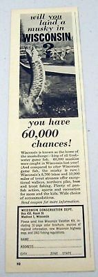 1963 Print Ad Wisconsin Conservation Madison,WI Musky Fishing