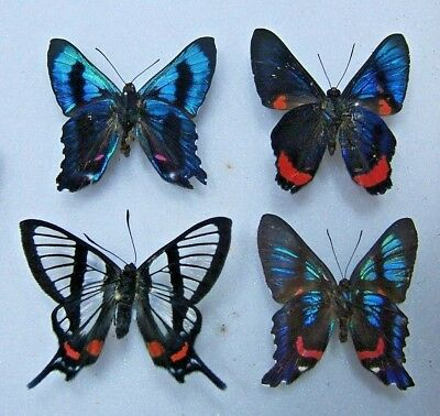 Four Stunningly Beautiful Tropical Butterflies
