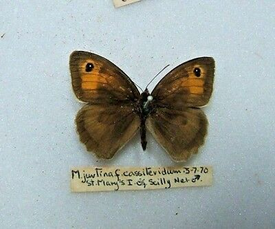 SCILLY ISLES M. jurtina ssp. cassiteridum Meadow Brown Butterfly St. Mary's 1970
