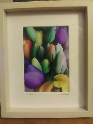 tulip white framed in bloom hanging standing colorful white matting