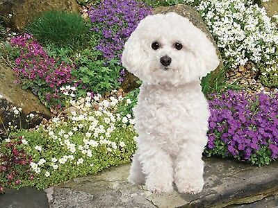 3D Picture Dogs Bichon Frise in front of flowers Size 39 x 29 cm approx New