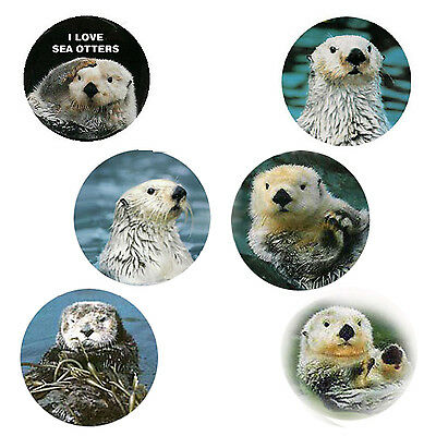Sea Otter Magnets: 6 Happy  Sea Otters  for your Fridge or Collection