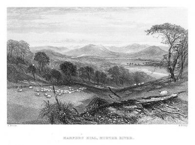 1870 - Harpers Hill Hunter River Australia Australien steel engraving Stahlstich
