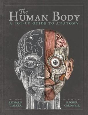 The Human Body A Pop-Up Guide to Anatomy by Richard Walker 9781787410589