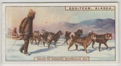 Husky Dog Team Sled Alaska 90+ Y/O Trade Ad Card