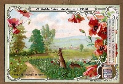 Rabbits Hares In A Field Nice c1900 Trade Ad Card