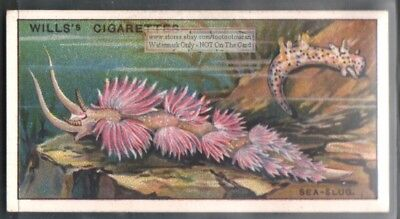 Sea Slug c90 Y/O Trade Ad Card