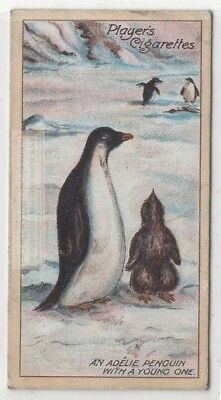 Adelie Penguin with a Young One Scott Expedition  100+ Y/O Ad  Card
