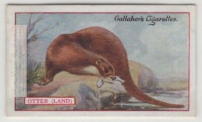 Commercial Value Of The Land Otter 90+ Y/O Trade Ad Card