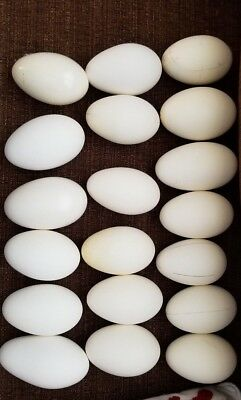 Lot of 18 Blown 2 holes Empty Goose Eggs Mixed Size Small- Large