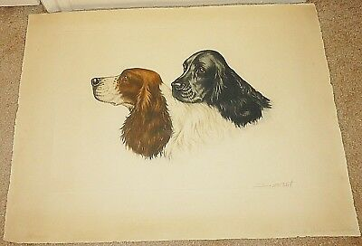 Jean Herblet Original Colored Etching  2  Cocker Spaniel Heads France