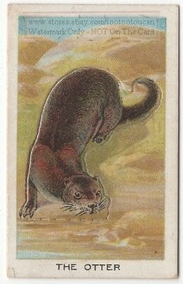 Otter With Pop-Up Image 1920s Ad Trade Card