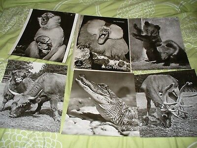1956 Czech Prague Zoo Folder With 24 Pictures Of Animals Bear Elephant Monkeys