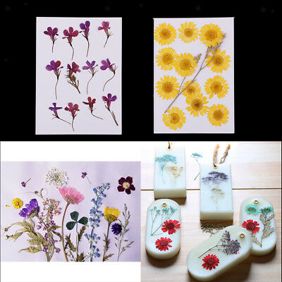 24Pack Natural Real Pressed Dried Flowers for DIY Craft Bookmark Card Making