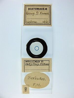 Vintage Microscope Slide. Diatom Group. 9 forms. Barbados.
