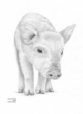PIGLET PIG (2) Limited Edition art drawing print signed by UK artist