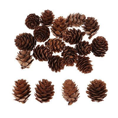 60Pcs Large Dried Pine Cones Party Favor Living Room Holiday Decor Baubles