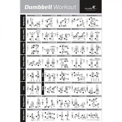 Dumbbell Workout Exercise Poster Laminated - Strength Training Chart - Build...