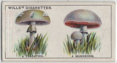 """The """"Difference"""" Between Mushrooms and Toadstools 95+ Y/O Trade Ad Card"""