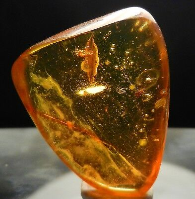 Authentic Dominican Amber with Fossil Insect Inclusion *L21*