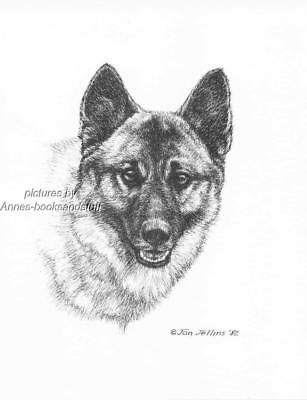 #309 NORWEGIAN ELKHOUND dog art print * Pen and ink drawing by Jan Jellins