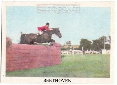 """Show Jumping Horse """"Beethoven""""  World Champion  Vintage Ad Trade Card"""