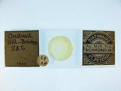 Antique Microscope Slide by C.L.Peticolas. Diatoms from Chestnut Hill-Bridge.