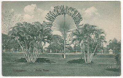 SINAGPORE PALM TREES PC Postcard SOUTHEAST ASIA Asian WILSON & CO Palms