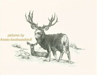 #149 MULE DEER * wildlife  art print *  pen & ink drawing by Jan Jellins